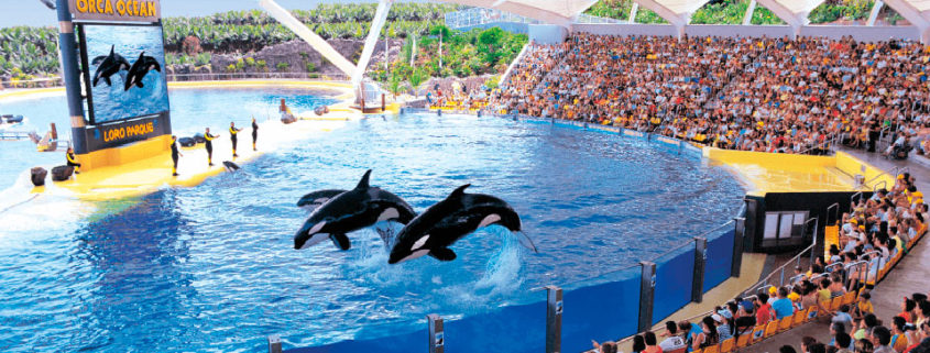 Loro Parque Review Tenerife